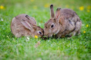 Conejo animal de poder